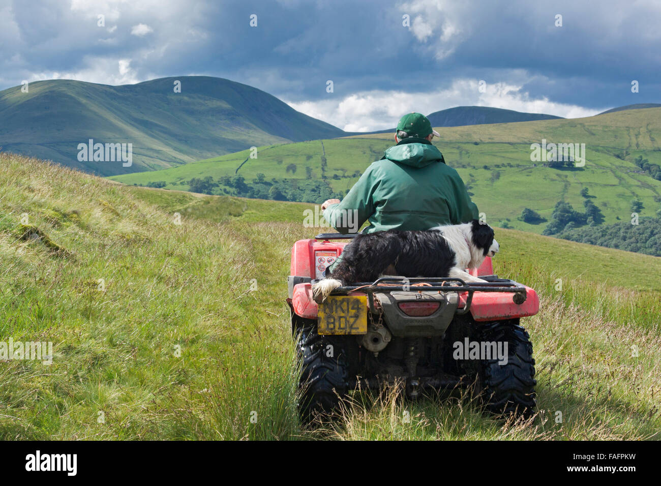 Shepherd on a quad bike with sheepdog sitting behind him, driving on moorland, UK - Stock Image