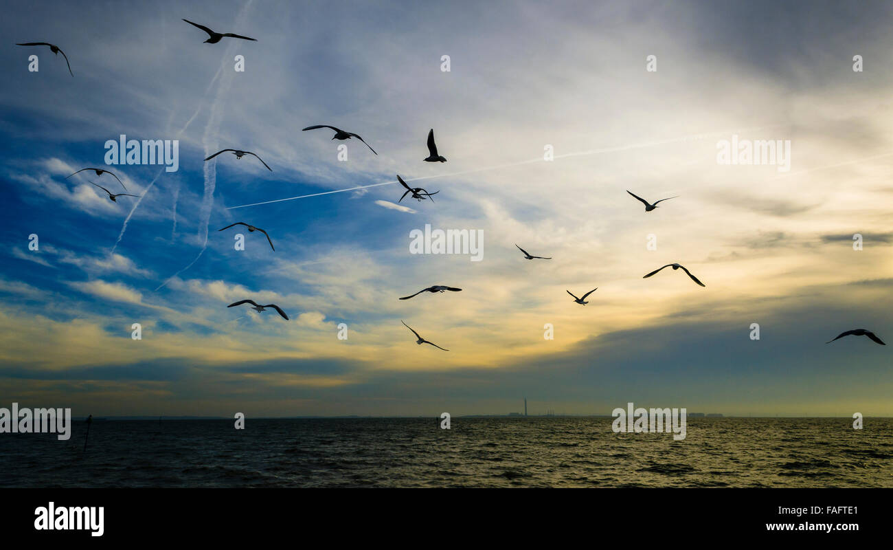 Seagulls Flying over Thames Estuary, Southend on Sea, Essex, Britain - Stock Image