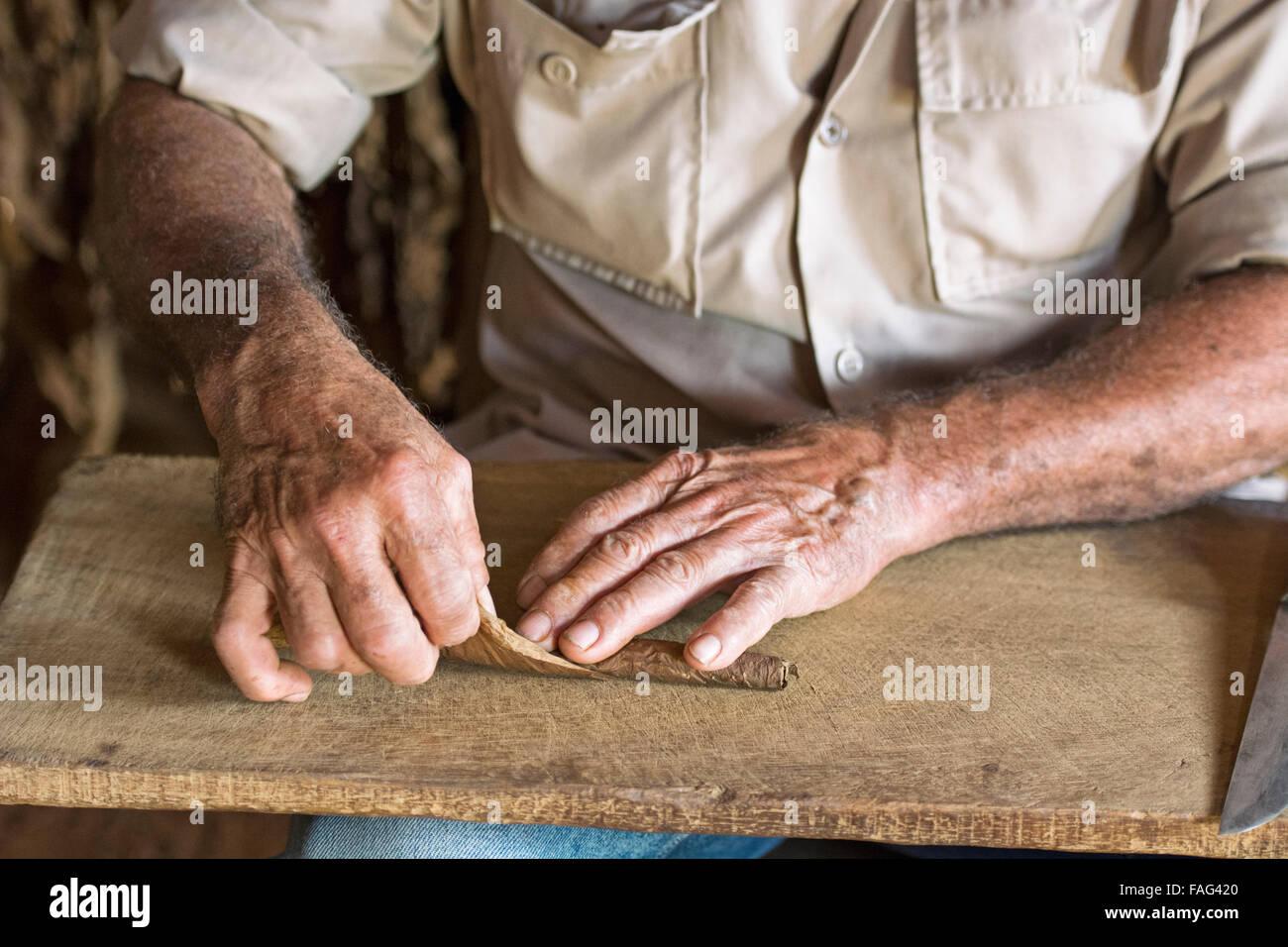 Cuba Cigar Rolling , Cuban Hand Rolled Cigar Maker - Stock Image