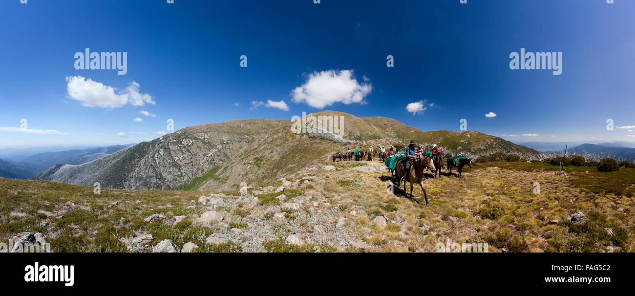 Lin Baird leads riders and packhorses down Eskdale Spur to the conclusion of a 5-day ride over the Bogong High Plains. - Stock Image