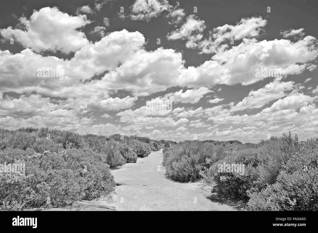 Hiking trail in Royal National Park, Sydney Australia - Stock Image