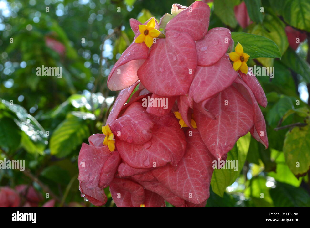 Pretty Red Flowers With Green Leaves In Garden Stock Photo 92568723