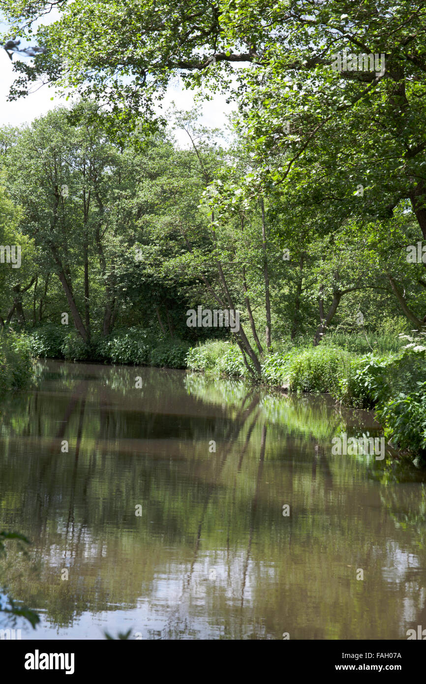 The River Churnet part of The Caldon Navigation between Cheddleton and Consall  Churnet Valley Staffordshire England - Stock Image