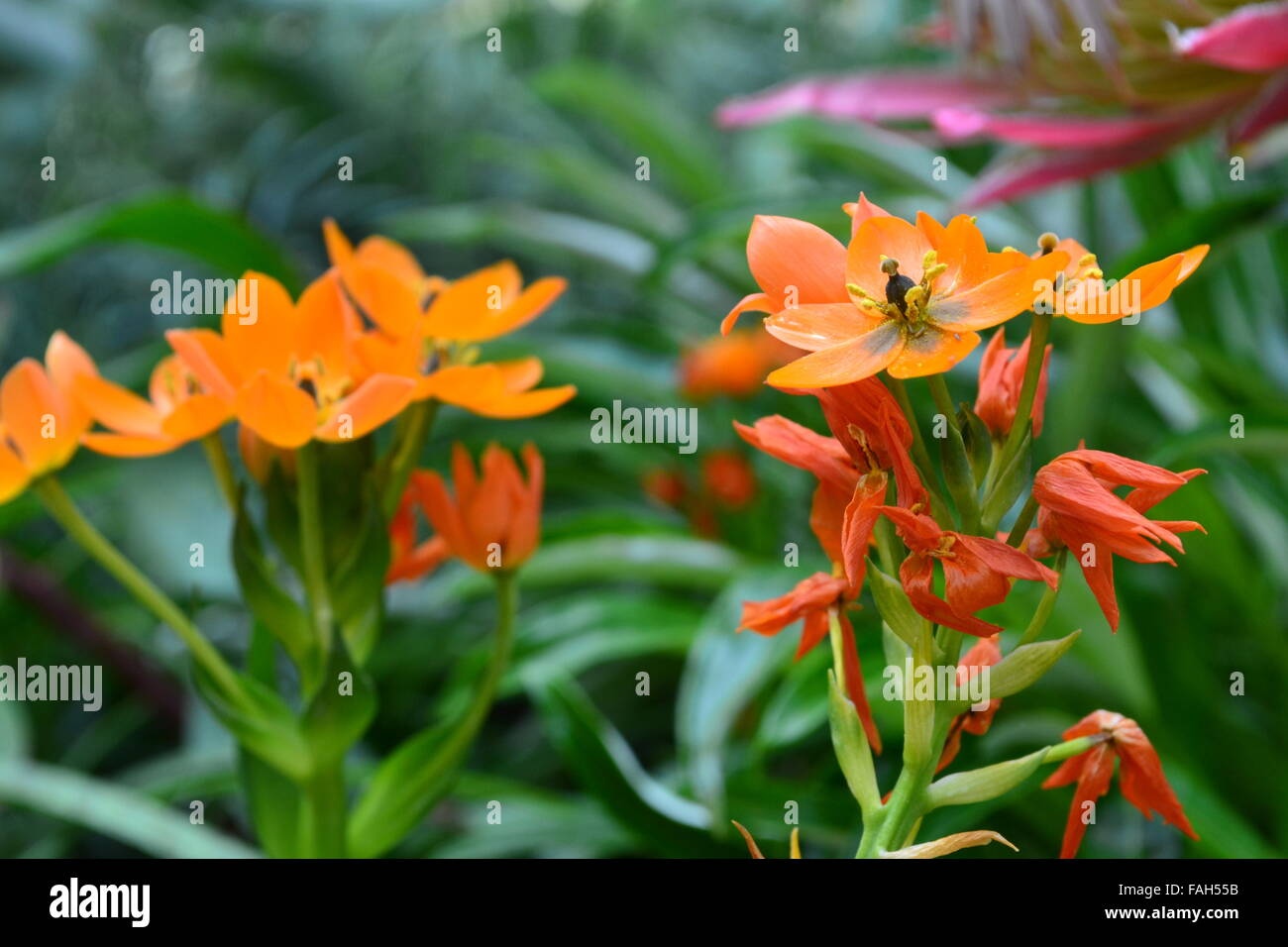 Pretty Orange Flowers Stock Photos Pretty Orange Flowers Stock