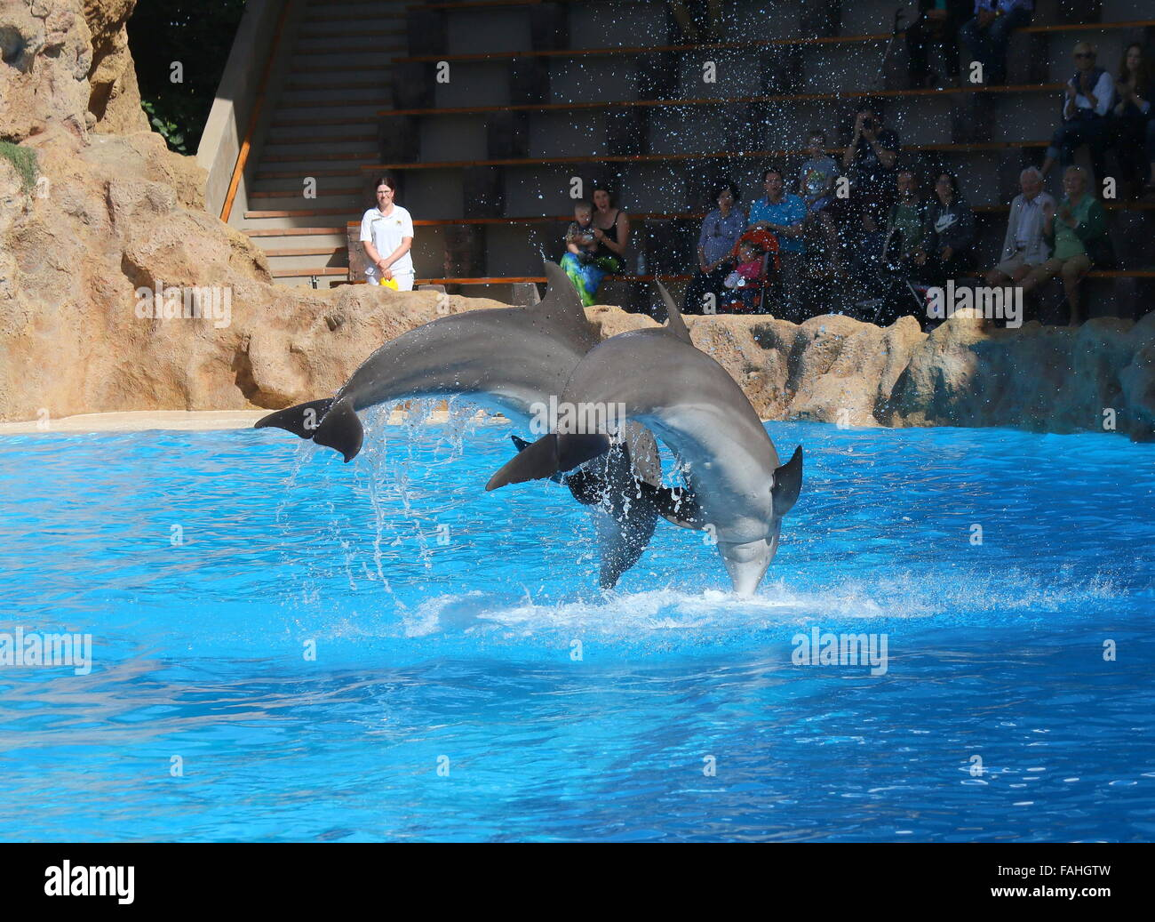 Tourists watching bottlenose dolphins performing at Loro Parque Zoo & Marine Park in Puerto de la Cruz, Tenerife, - Stock Image