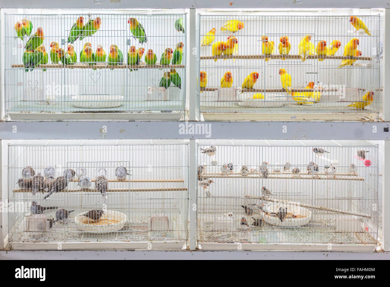 Birds for sale at Souq Waqif, Doha - Stock Image