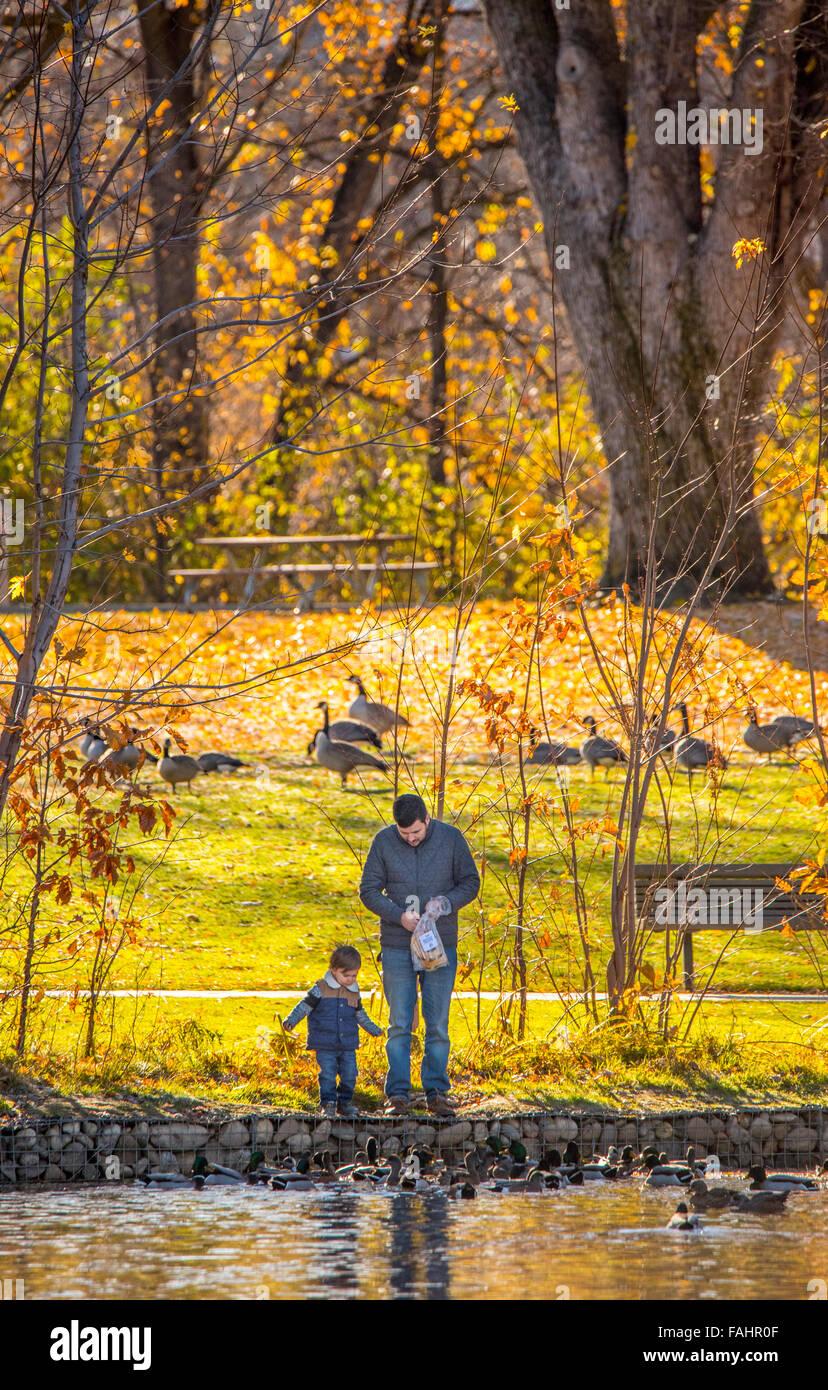 Boise Parks, Father and Son feeding Geese. Julia Davis Park Pond, Boise River Greenbelt, Boise, Idaho, USA - Stock Image