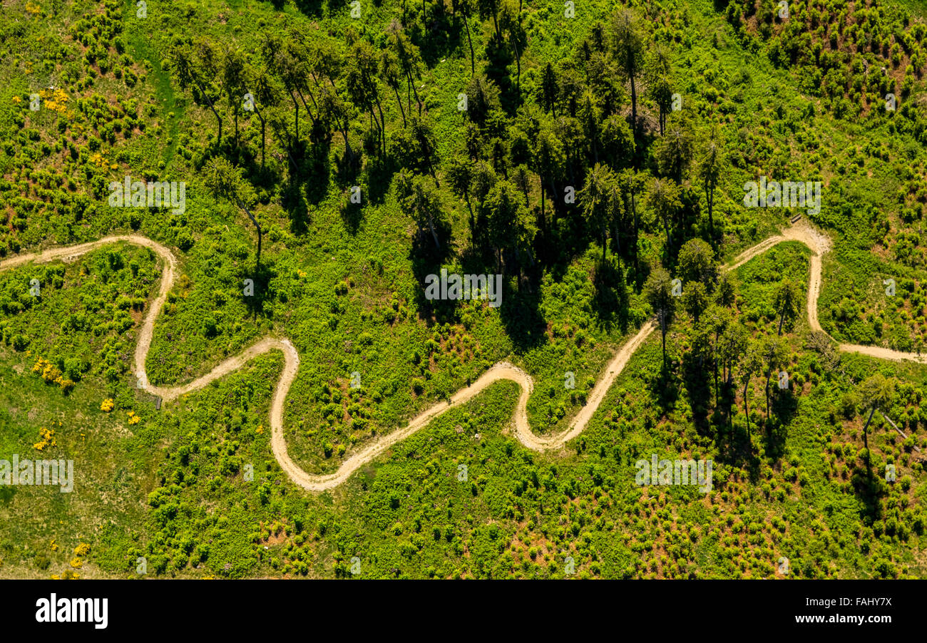Aerial view, tortuous path, meadow, conifers, pines, looped mountain path at the heathland hut at Niedersfeld, Rothaarhills, - Stock Image