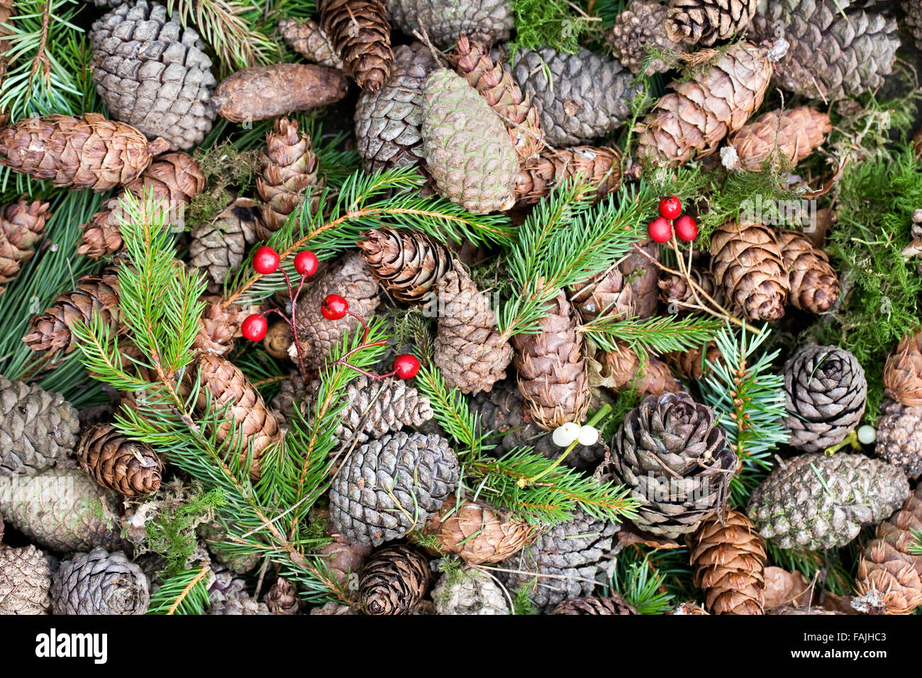 Assorted Pine cones, berries and needles. - Stock Image