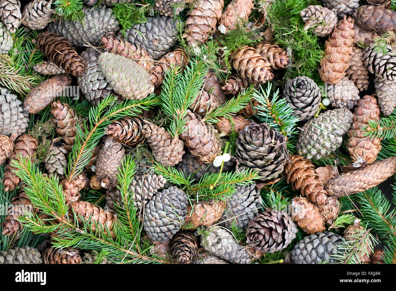 Assorted Pine cones and needles. - Stock Image