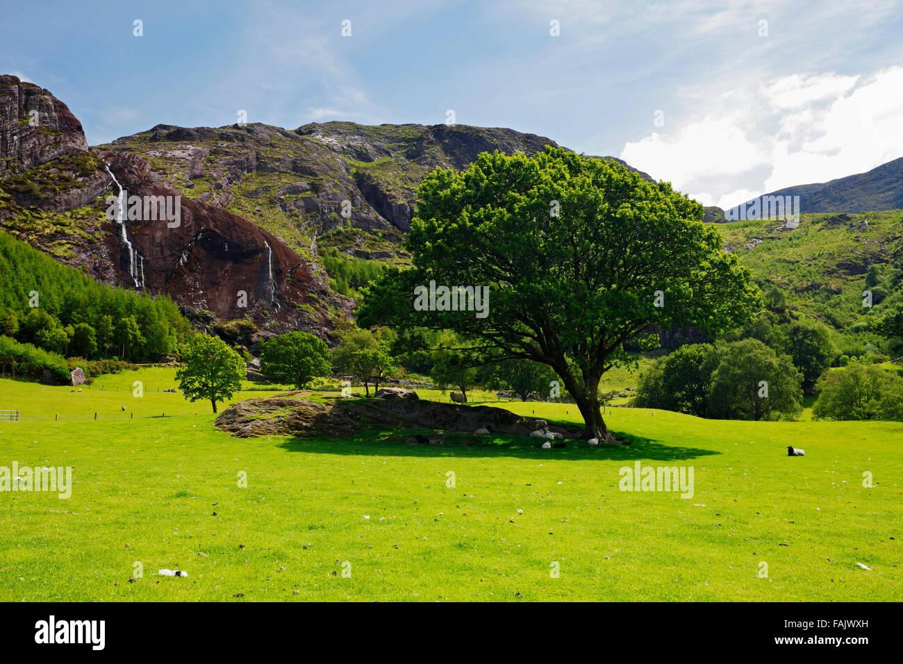 Gleninchaquin Park on Beara peninsula near Kenmare, Co. Kerry, Ireland - Stock Image