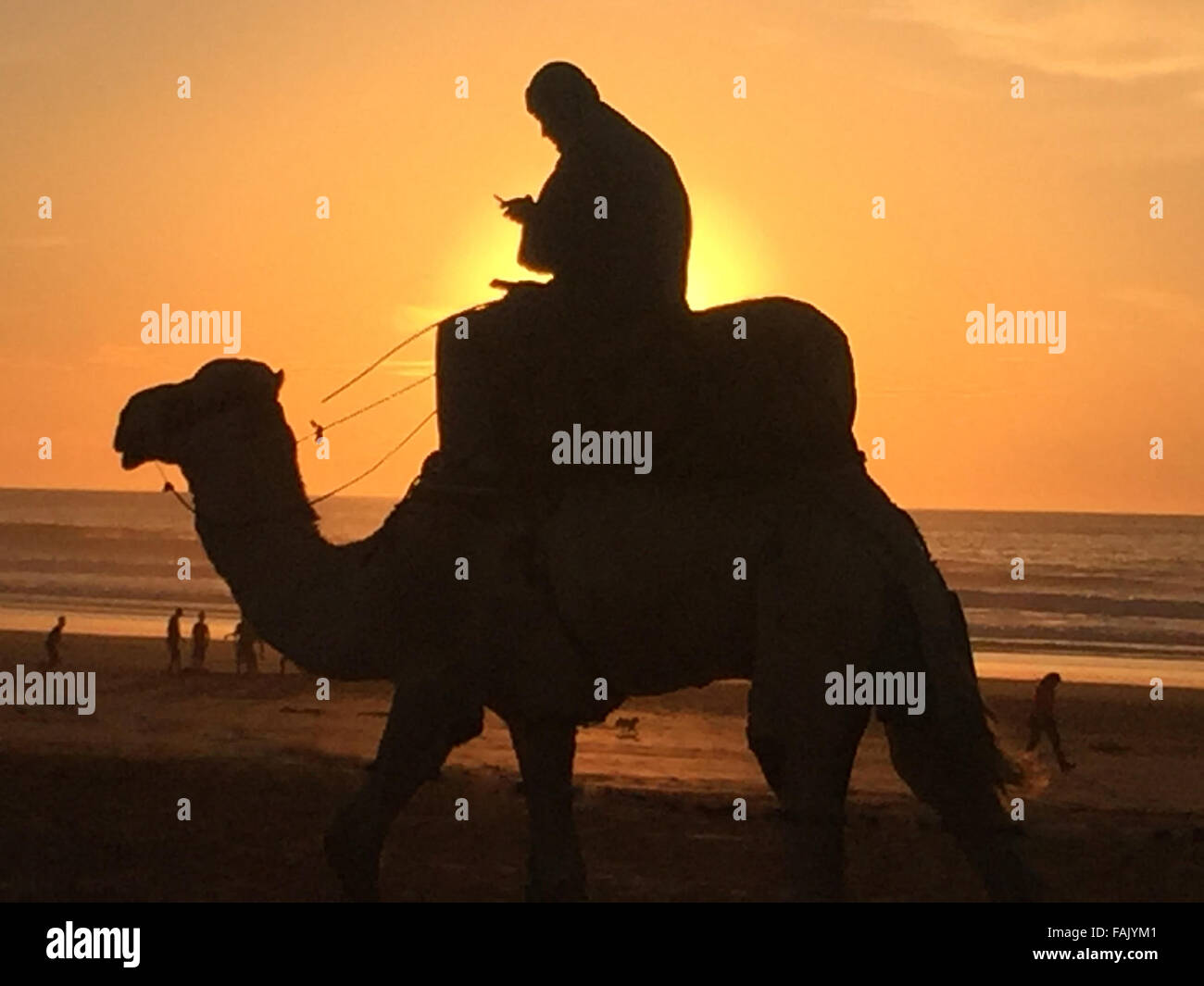 CAMEL RIDER CHECKING MOBILE PHONE. Photo Alastair Gale - Stock Image