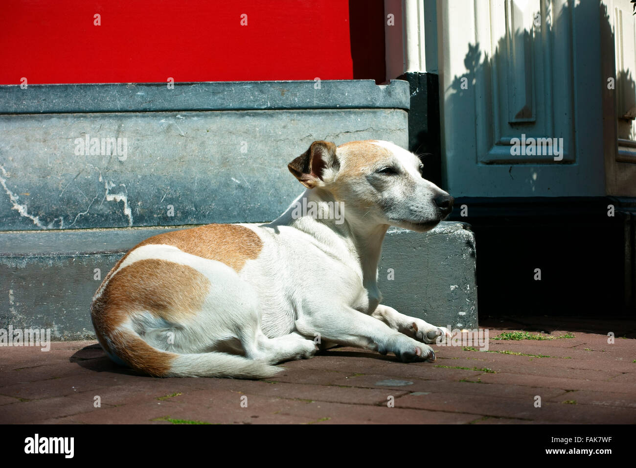 A dog lying on the ground - Stock Image