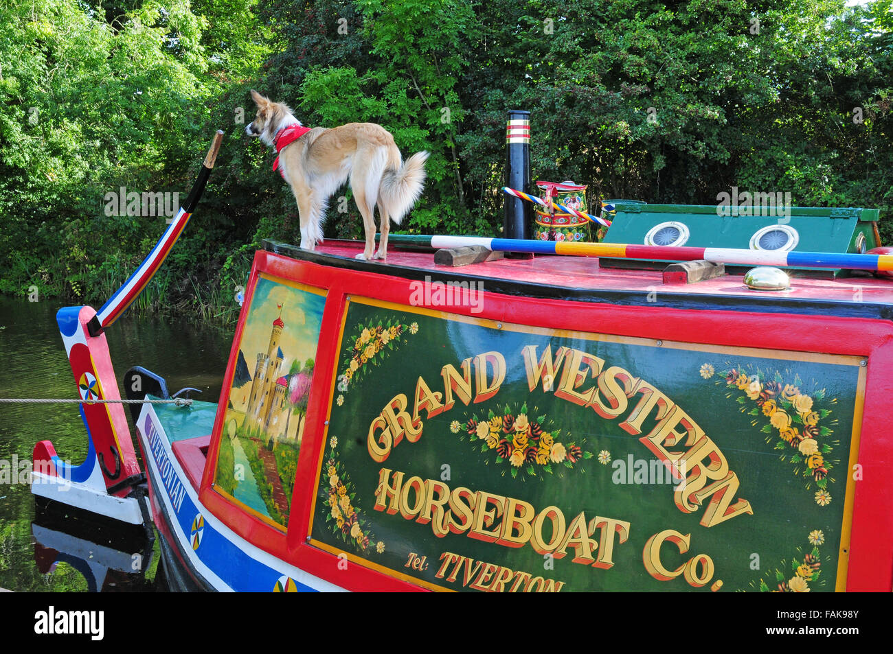 Dog with red spotted neckerchief on the roof of a barge, Grand Western Canal, Devon. - Stock Image