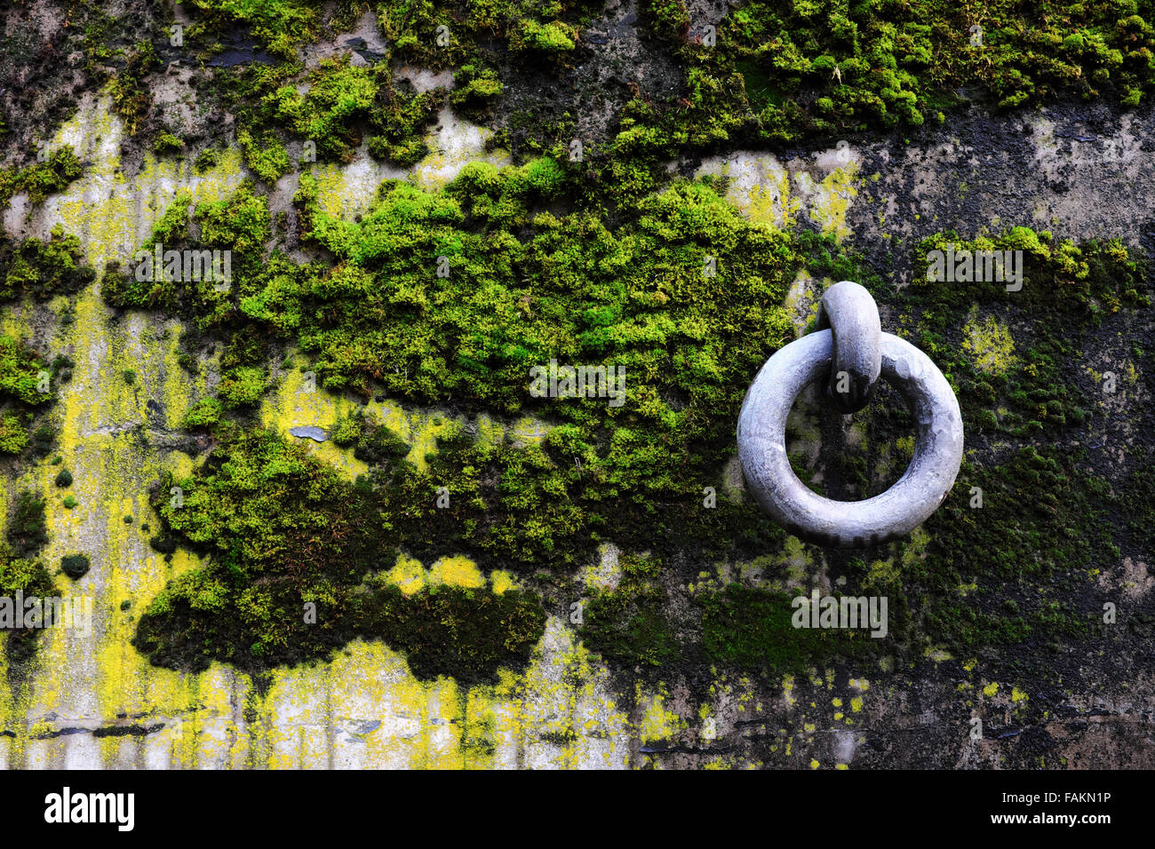 Steel anchor ring on moss and algae covered concrete bunker wall, Artillery Hill, Fort Worden State Park, Port Townsend - Stock Image