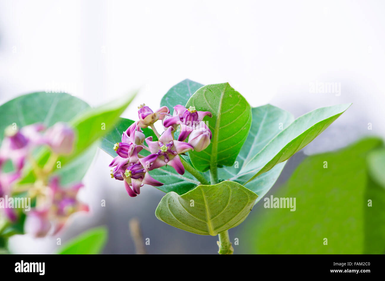 Flowers In India Stock Photos Flowers In India Stock Images Alamy