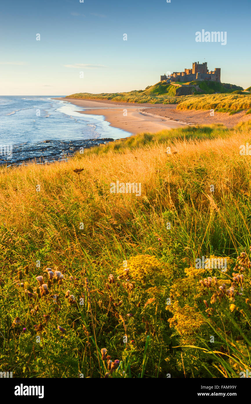 Bamburgh Castle at sunrise on the east cost of Northumberland, England. - Stock Image