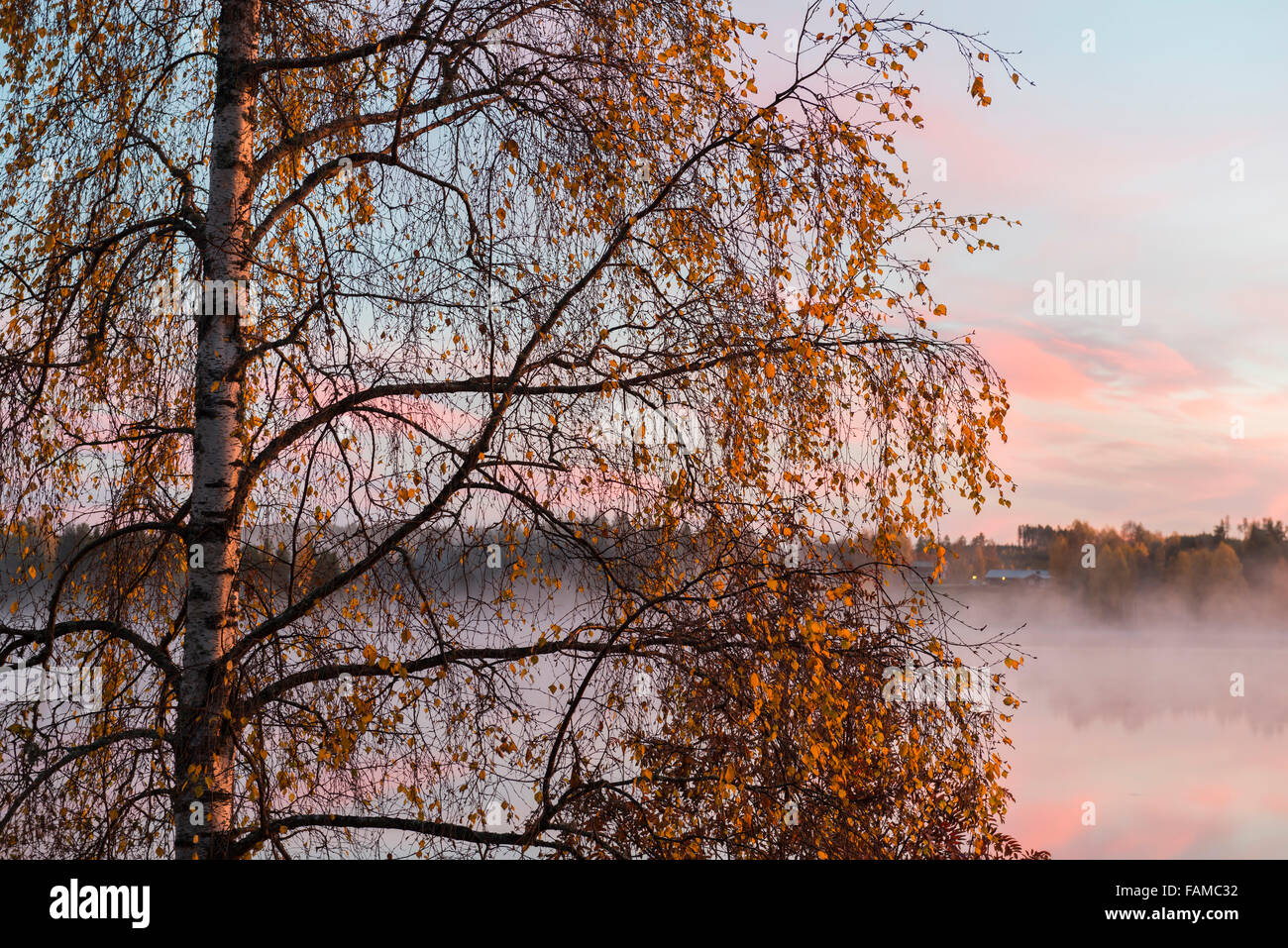 Lakeside birch tree with autumn leaves - Stock Image