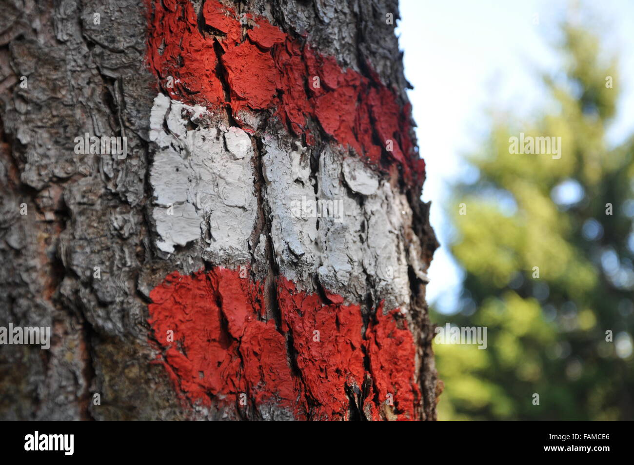 red white red painted on tree - Stock Image