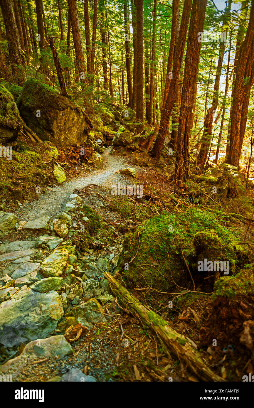 Bearver Lake Trail, Tongass National Forest near Sitka, Alaska.    Photography by Jeffrey Wickett, NorthLight Photography - Stock Image