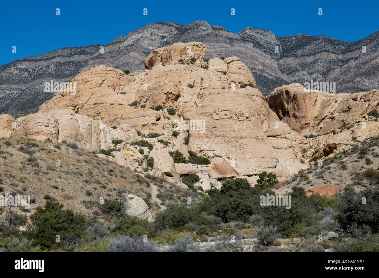Red Rock Canyon, Nevada.  Gray Limestone of La Madre Mountain Rises up over Younger Light Sandstone in The Keystone - Stock Image