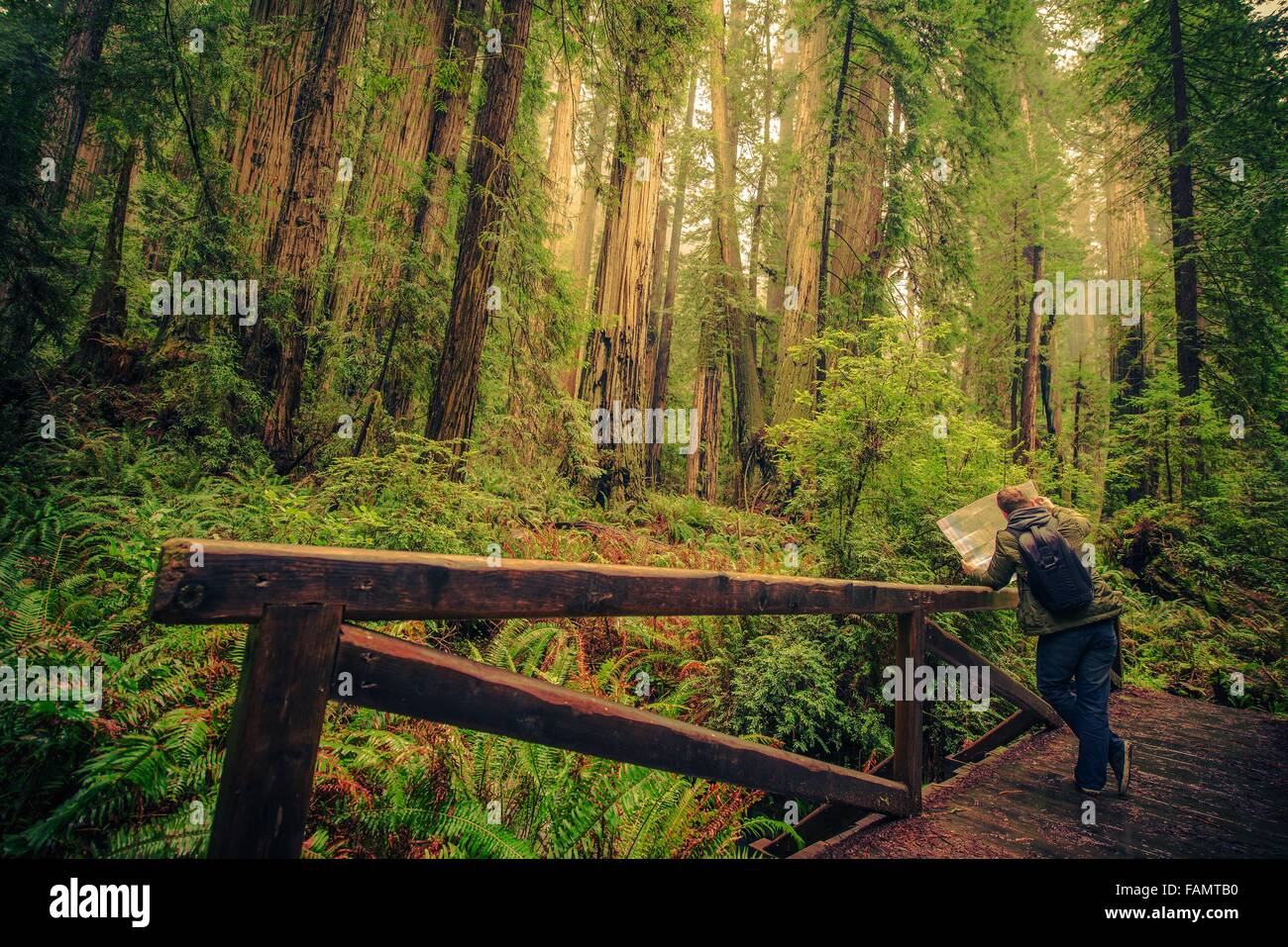 Map Of California Redwoods.Hiker With Map On A Trail In The Redwood Forest National Park Stock