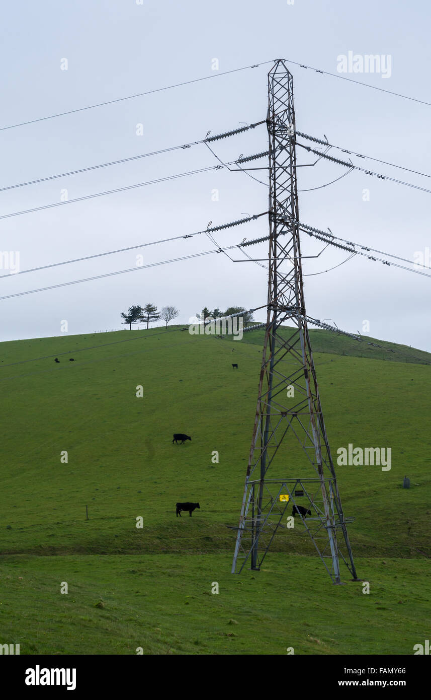 Electricity distribution pylon in the English countryside with a hill, trees and cows grazing in the background. - Stock Image