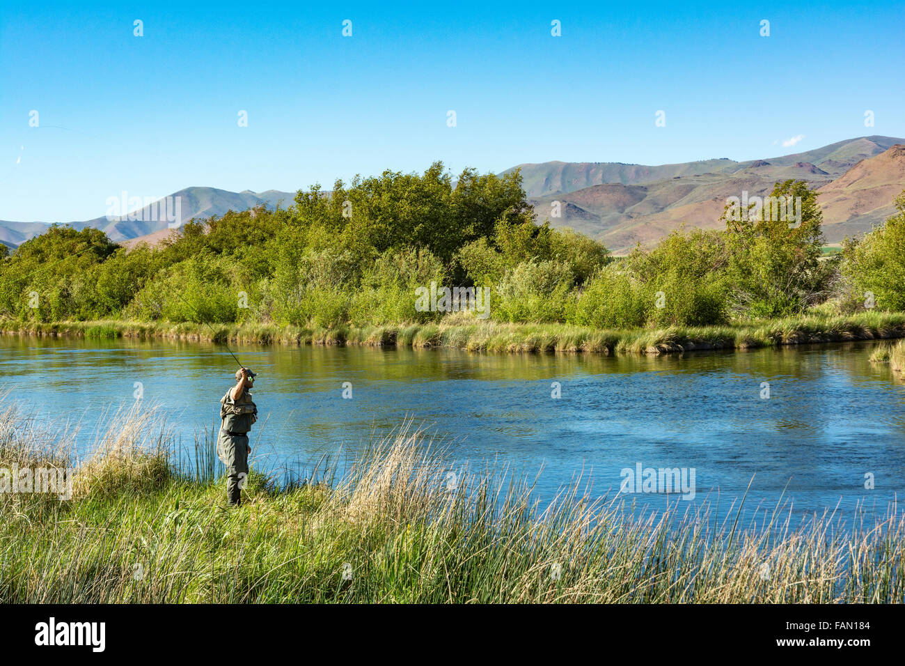 Idaho, Bellevue, Silver Creek Preserve, fly fisherman trout fishing - Stock Image