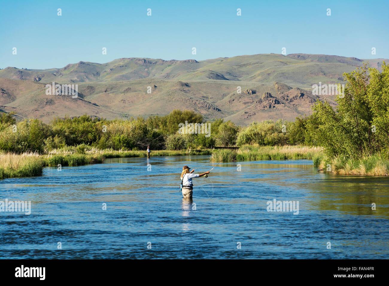 Idaho, Bellevue, Silver Creek Preserve, woman female fly fisherwoman trout fishing - Stock Image