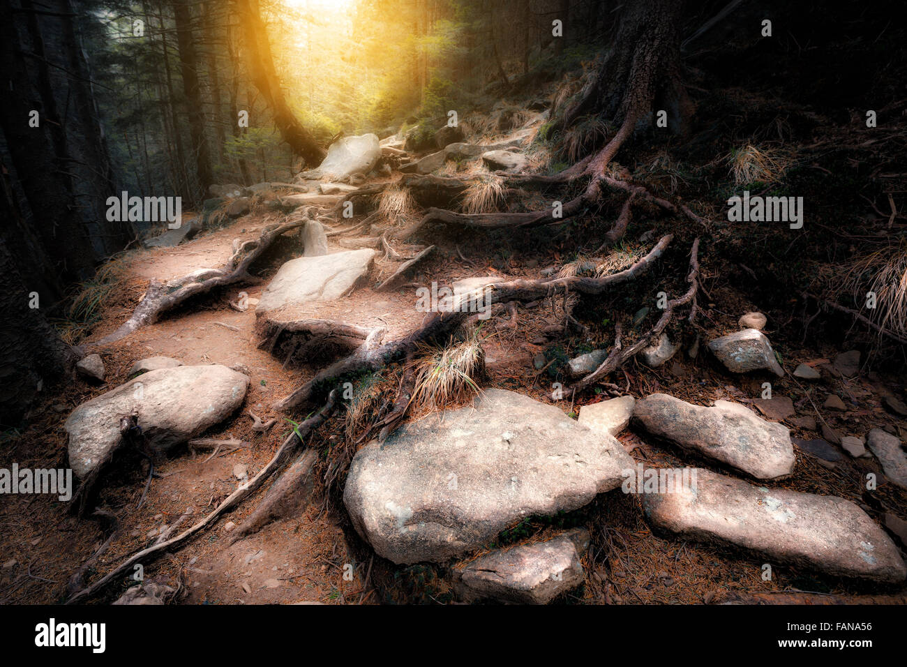 Old mystical forest - Stock Image