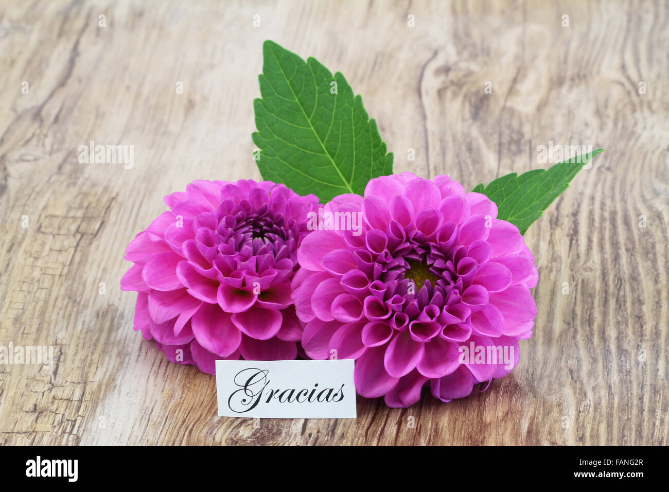 Gracias Which Means Thank You In Spanish Card With Pink Dahlia