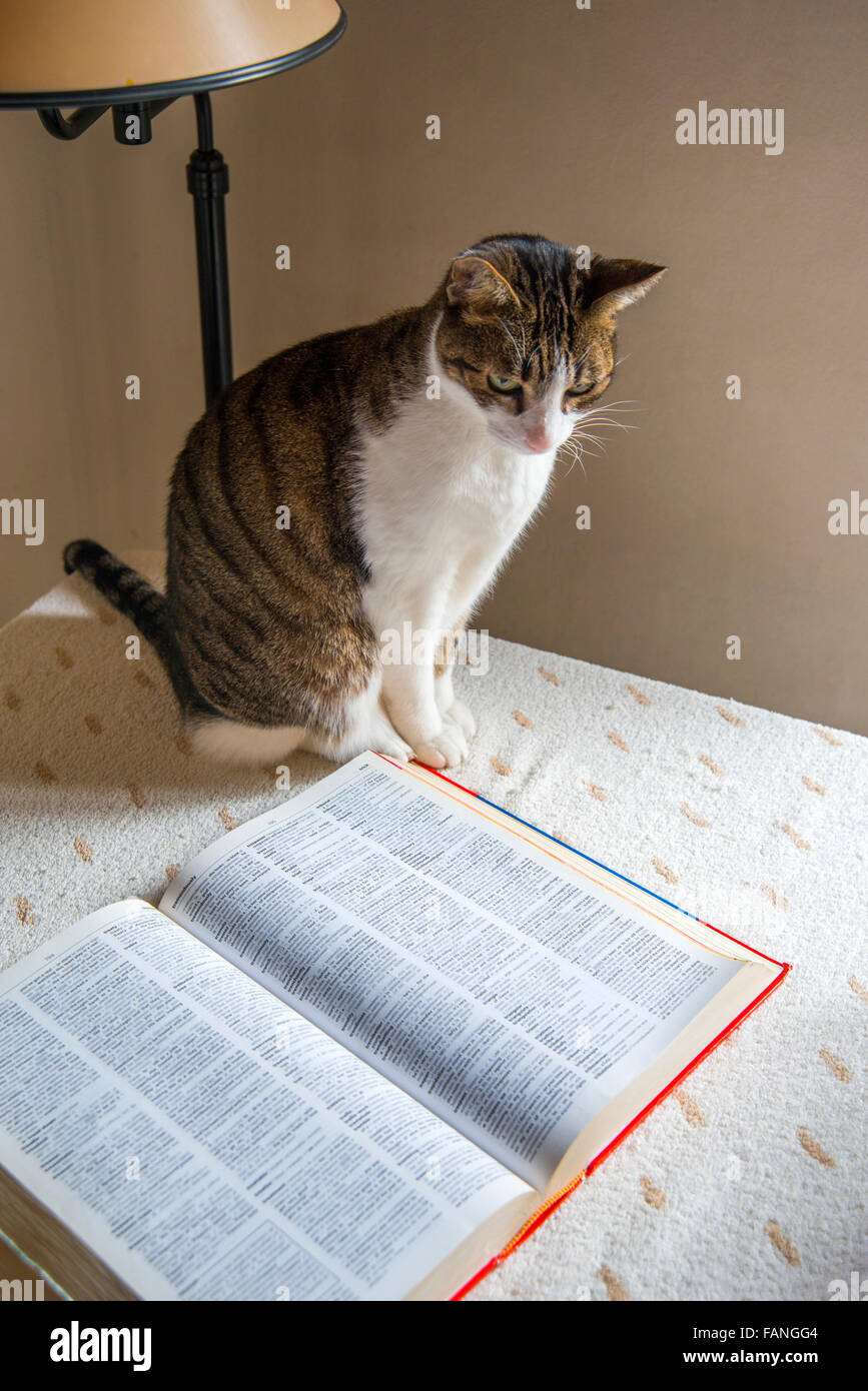 Cat sitting on a table, next to a dictionary. Stock Photo