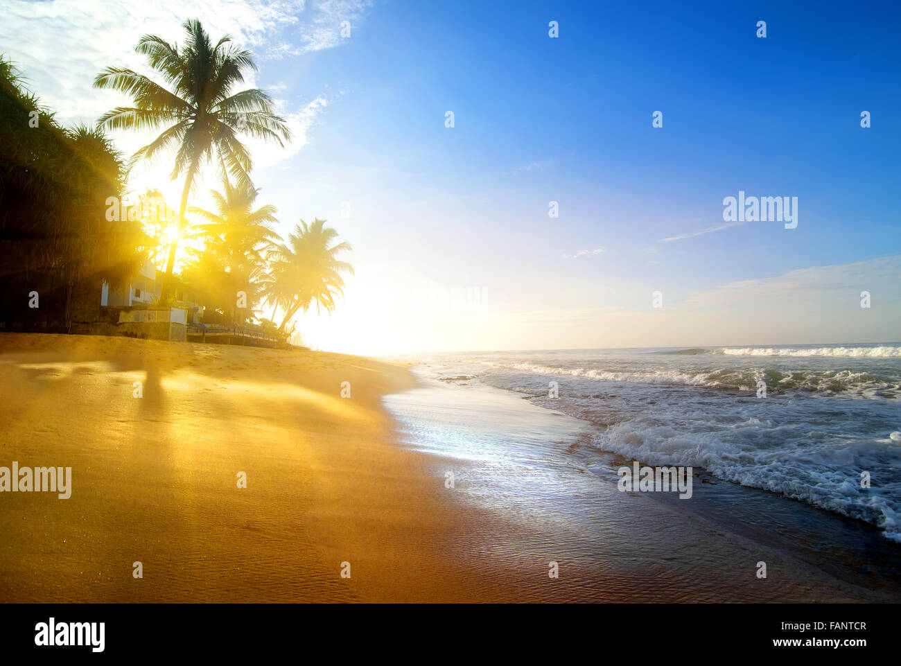 Palms on the sandy beach near ocean at sunrise - Stock Image
