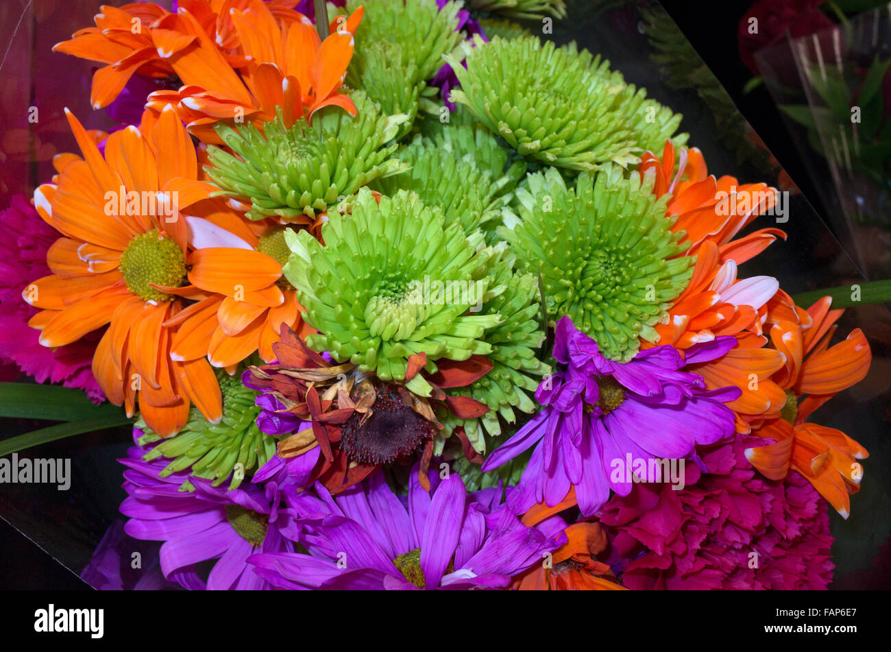 Bouquet of strikingly contrasting colors of orange green and purple flowers. St Paul Minnesota MN USA - Stock Image