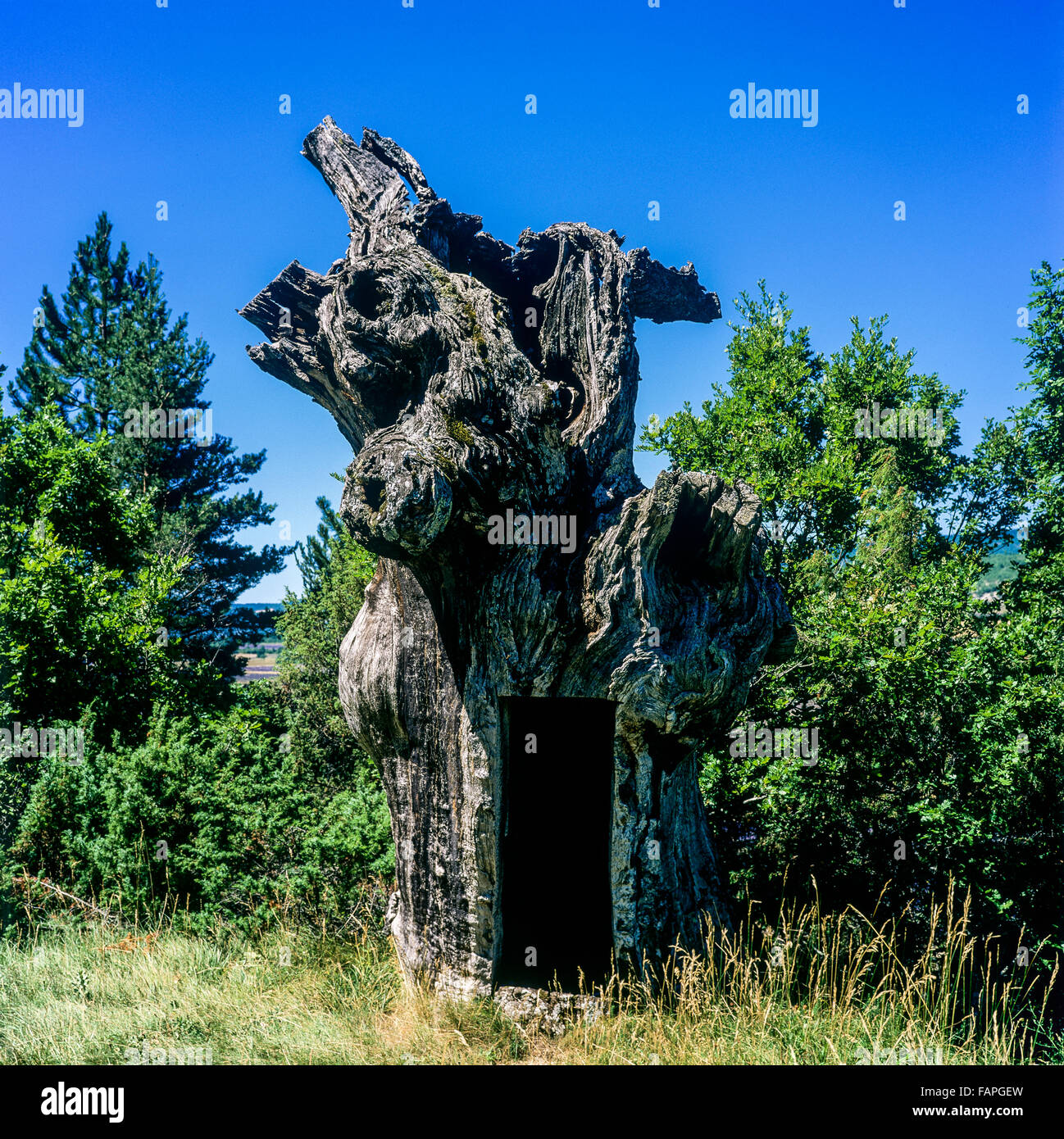 Dead tree trunk with a cut-out, Vaucluse, Provence, France - Stock Image