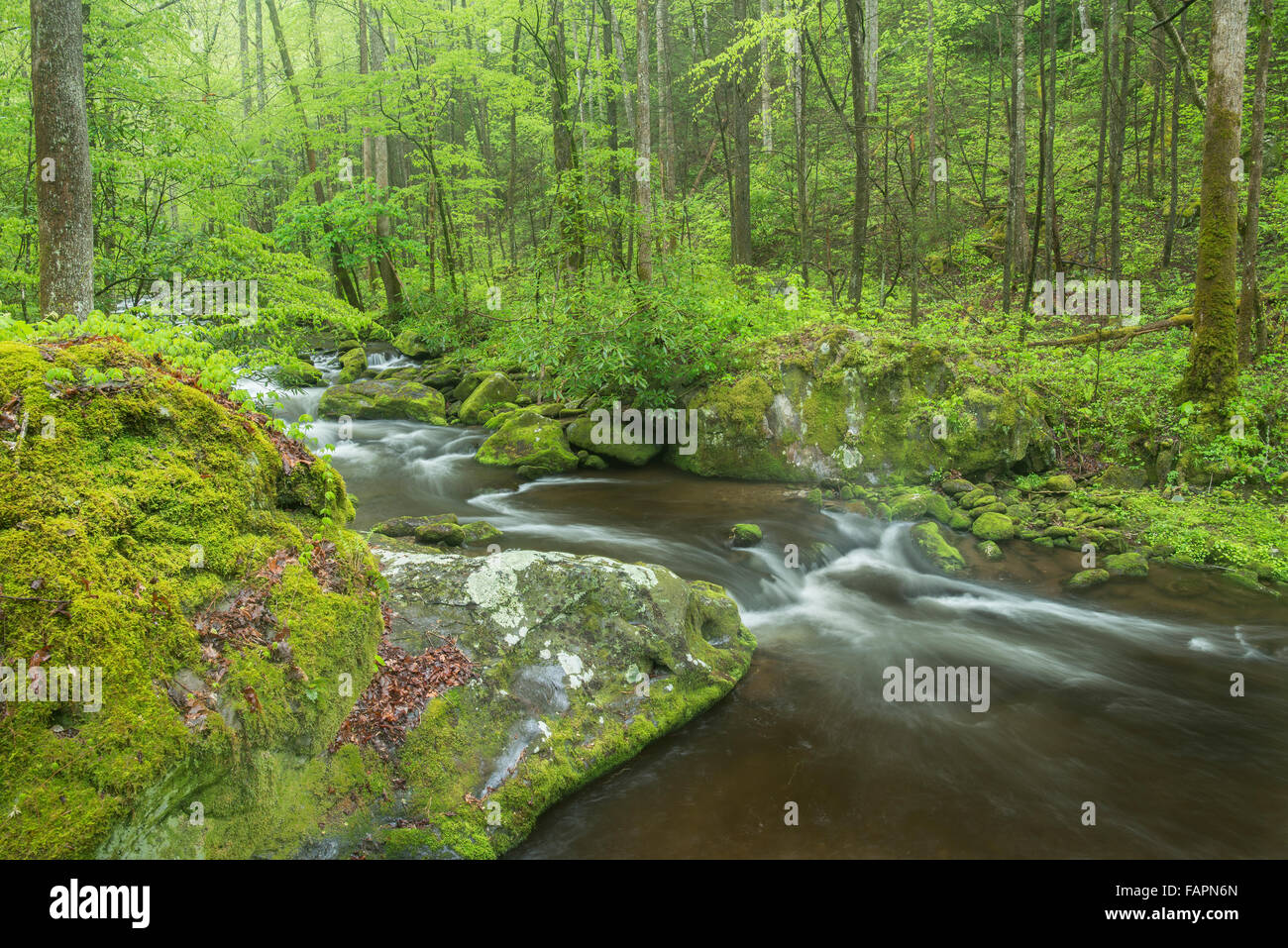 Roaring Fork flows around and over moss-covered rocks and boulders, Great Smoky Mountain NP, Tennessee USA - Stock Image