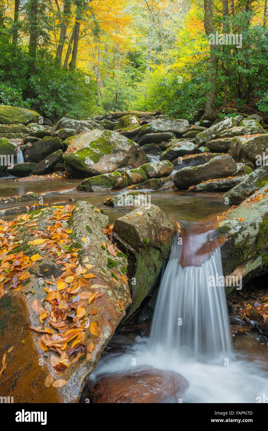 Waterfall along Road Prong viewed from Chimney Tops Trail, Great Smoky Mountains NP, Tennessee USA - Stock Image
