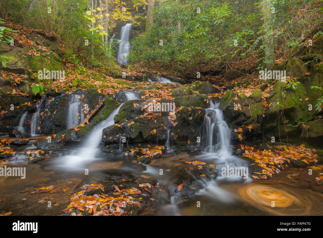 Autumn leaves swirling, Manis Branch Falls, Great Smoky Mountains NP, Tennessee USA - Stock Image