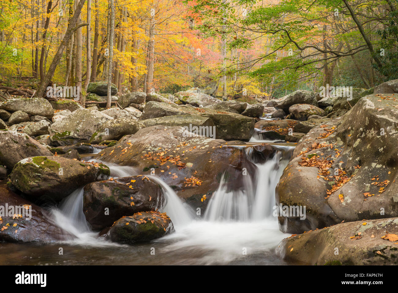 Autumn view of Middle Prong Little Pigeon River, Great Smoky Mountains NP, Tennessee USA Stock Photo