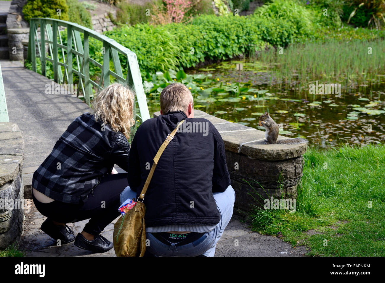squirrel being fed by man woman park parkland pond wildlife animals RM Floral - Stock Image