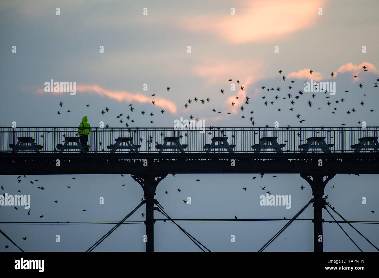 Aberystwyth Wales UK Sunday 03 January 2016 Starlings in sky above Aberystwyth pier at sundown, as an employee in Stock Photo