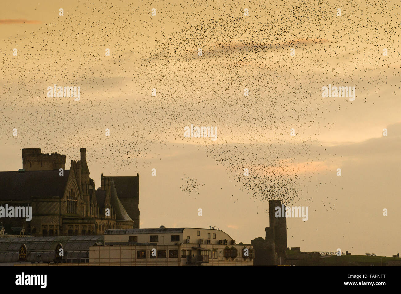 Aberystwyth Wales UK Sunday 03 January 2016 A huge flock of starlings perform spectacular displays in the air above Stock Photo