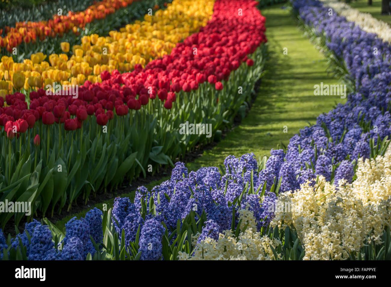 Keukenhof spring garden, Holland - Stock Image