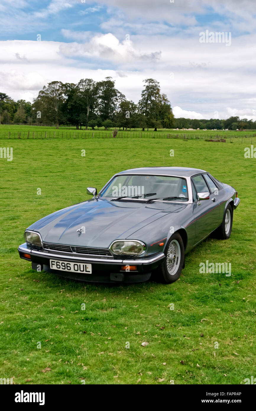 A Jaguar XJS 3.6-Litre luxury grand tourer 2 door coupe at the Breamore House Classic Car Show, Hampshire, United - Stock Image