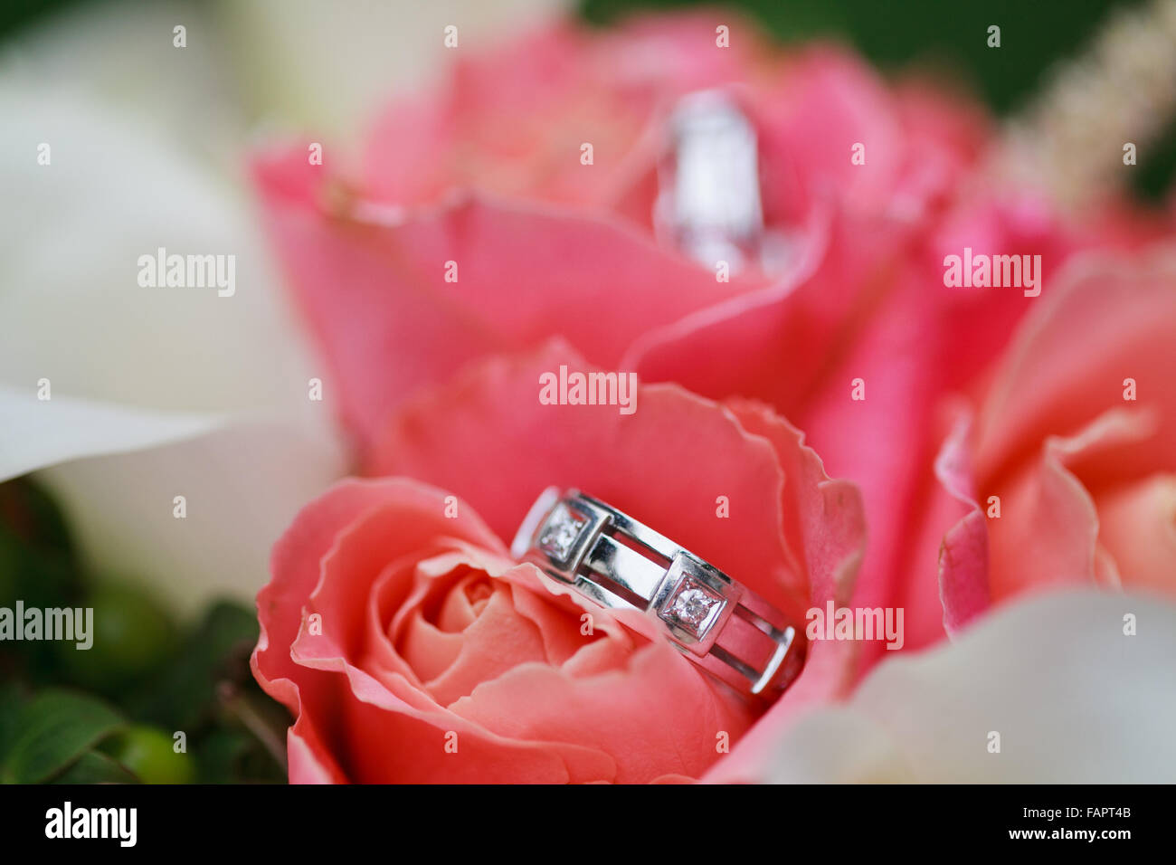 Beautiful wedding rings on the flowers Stock Photo: 92700283 - Alamy