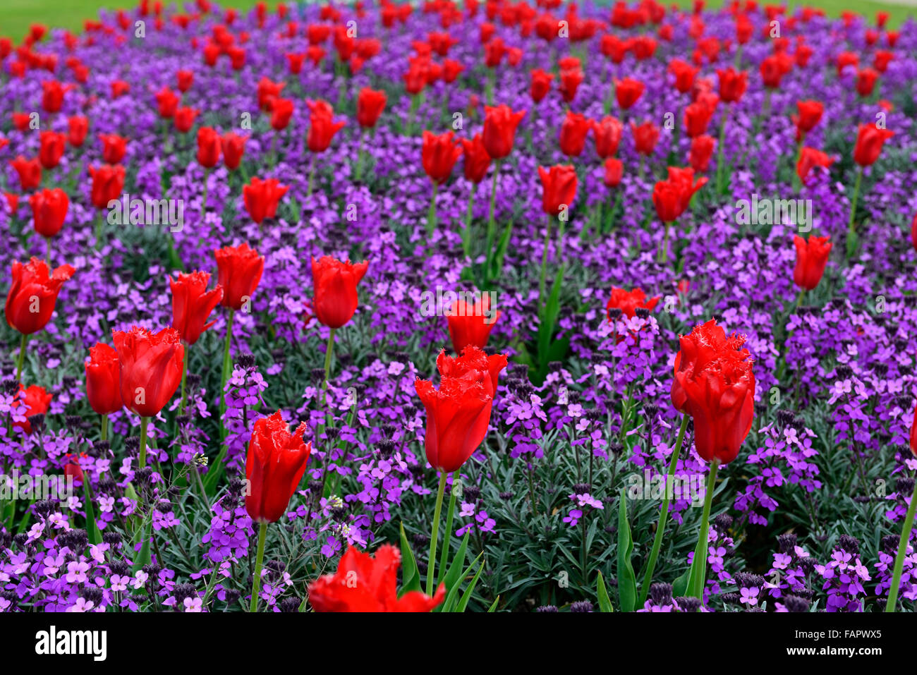 Red Purple Flower Combination Stock Photos & Red Purple Flower Combination Stock ...