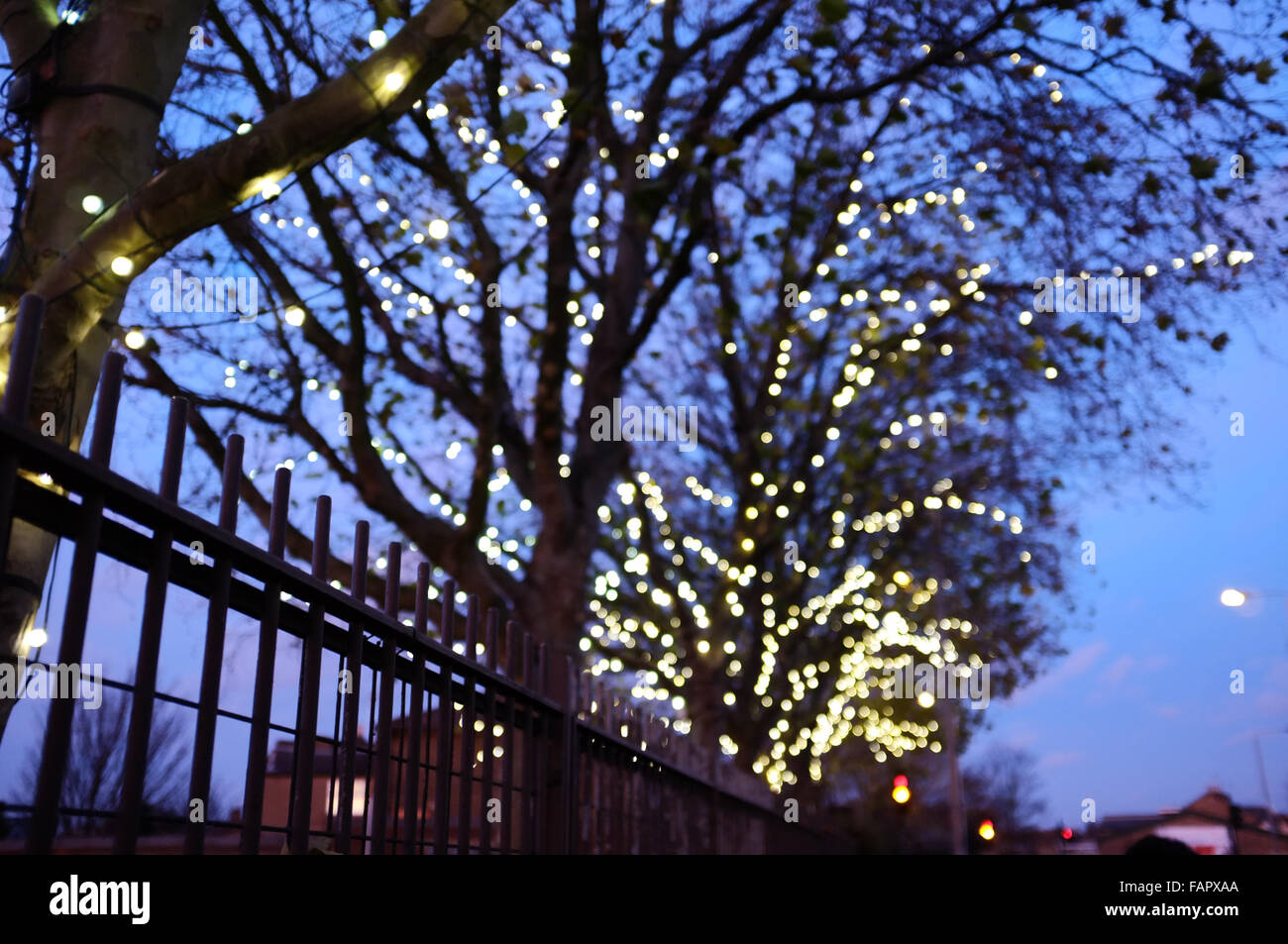 Street Lights In Trees In Leyton, East London, With Focus On Fence In  Foreground.