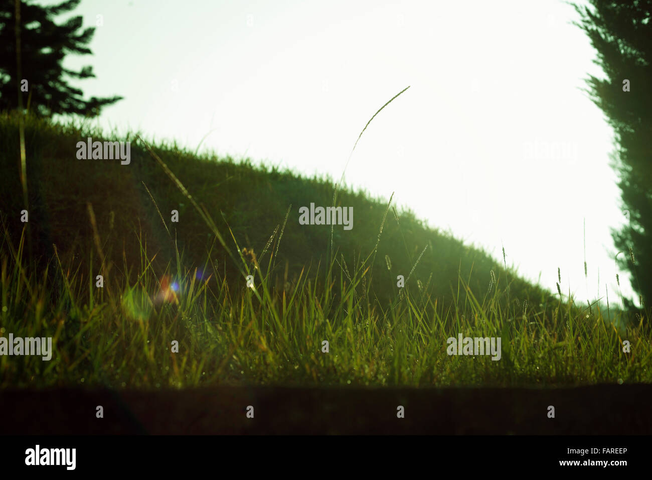 Green plains with some trees - Stock Image