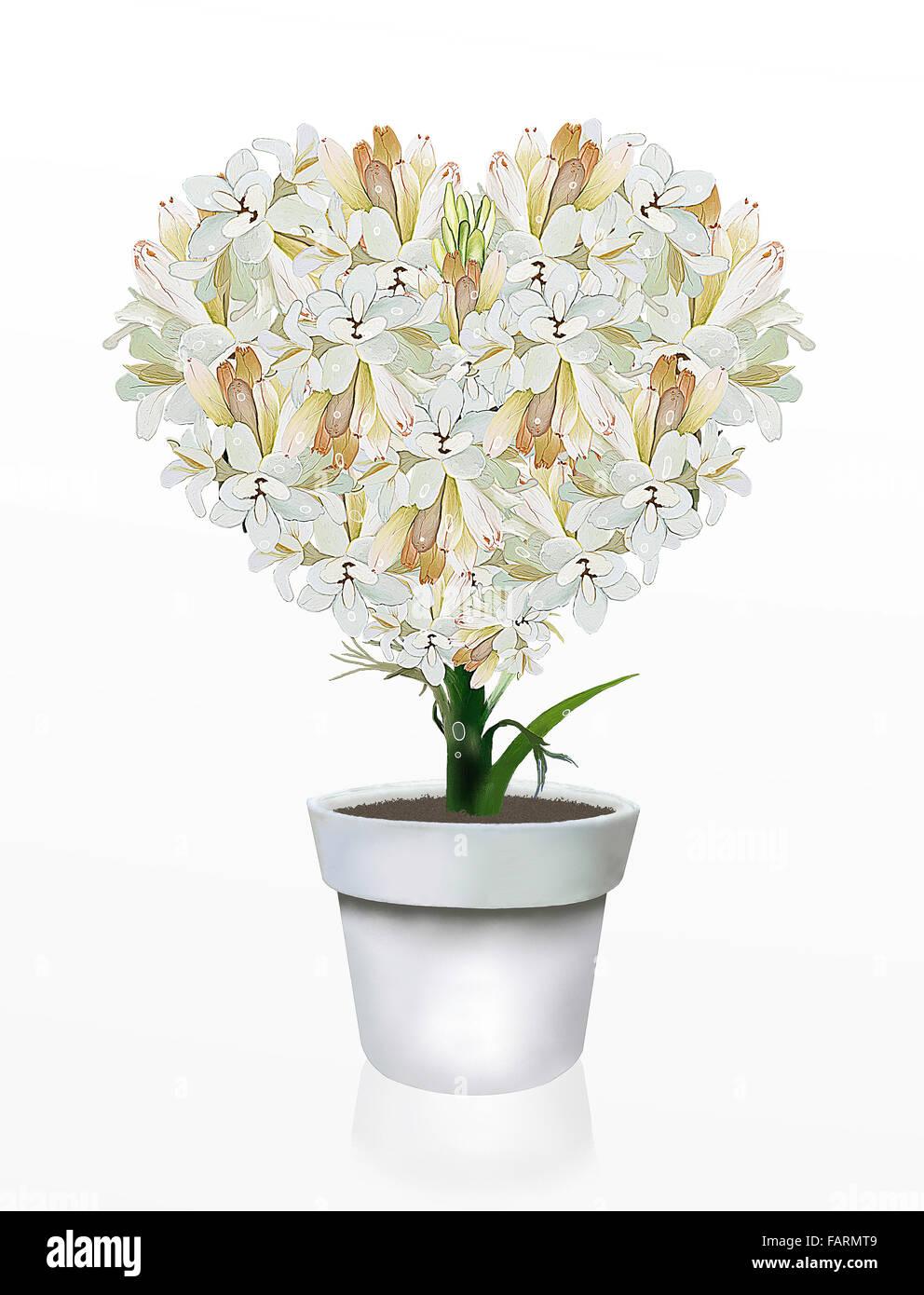 A Beautiful Heart Shape Of White Tuberose Flowers In Flowerpot On A