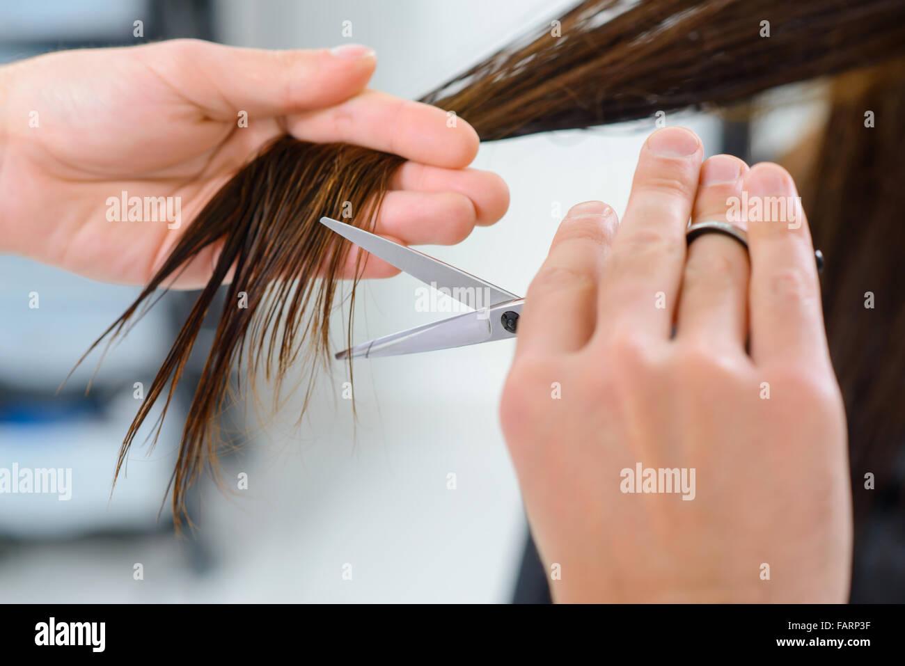 Hair trimming procedure in progress. - Stock Image